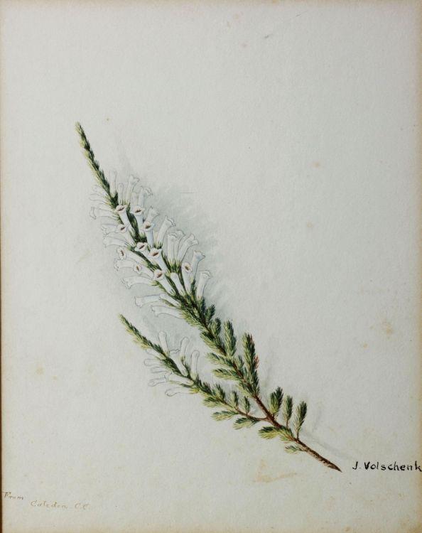 Jan Ernst Abraham Volschenk; Heather, three studies