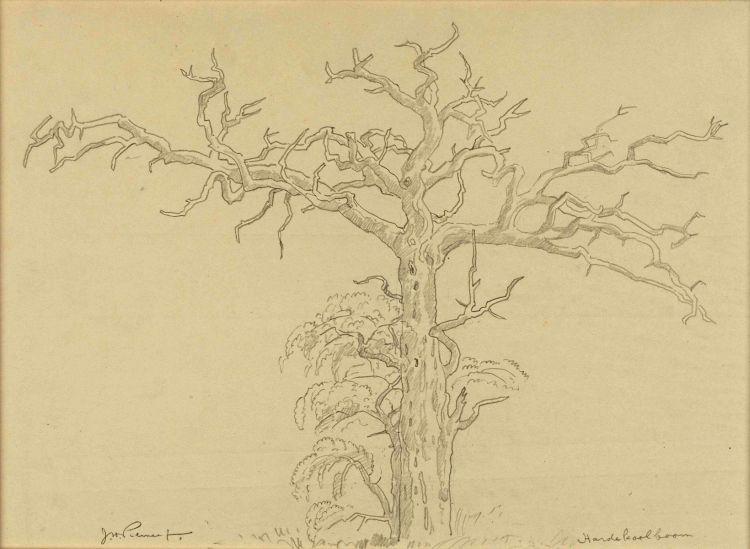 Jacob Hendrik Pierneef; Hardekoolboom