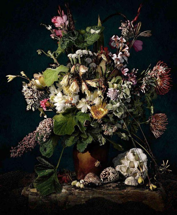 Andrew Putter; Hottentots Holland: Flora Capensis 2