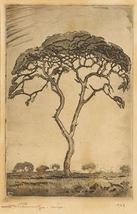 Jacob Hendrik Pierneef; Doringboom