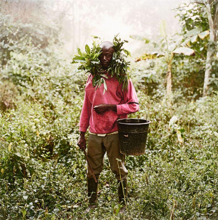 Pieter Hugo; Paul Ankomah, Wild Honey Collector, Techiman District, Ghana, 2005