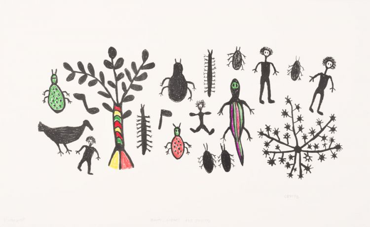 Cgoise Ncoxo; Plants, Lizard and Insects