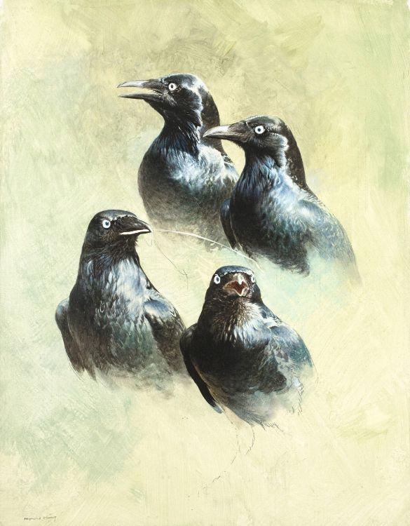 Raymond Harris-Ching; Starling Studies