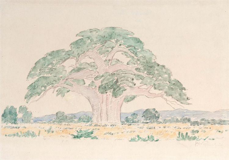 Jacob Hendrik Pierneef; Baobab Tree
