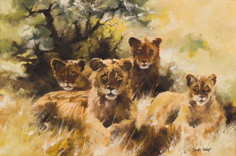 Leigh Voigt; Lions