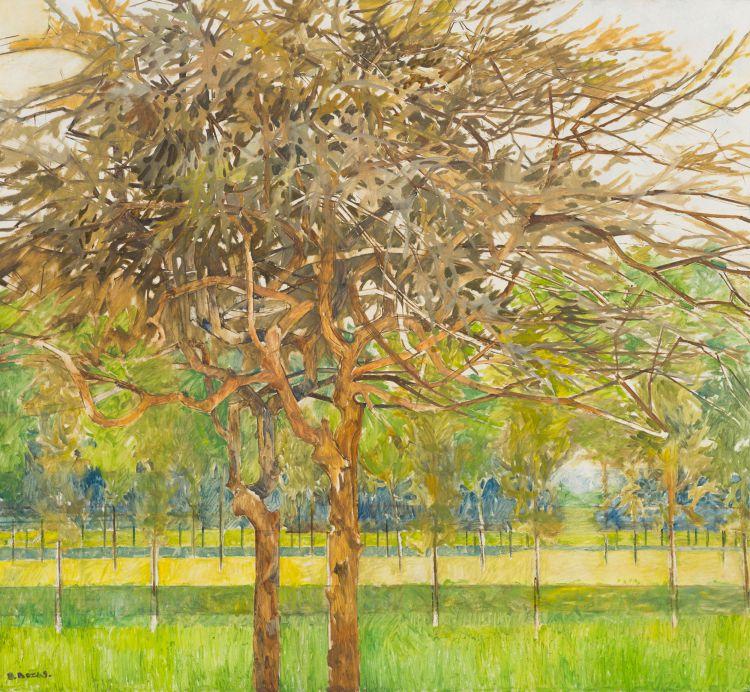 Diamond Bozas; Thorn and other Trees, Ndongwenya Park, Ulundi