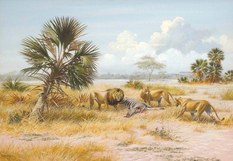 David Morrison Reid Henry; Lions in Gorongoza