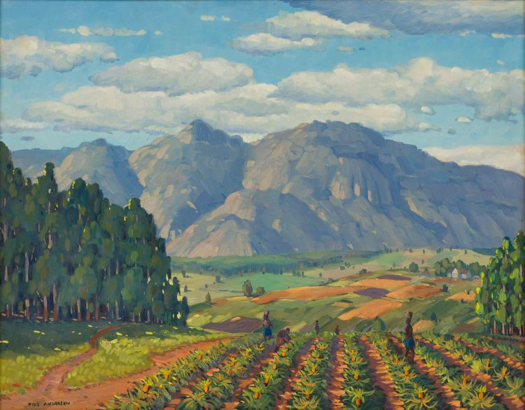 Nils Andersen; Field of Pineapple Plants