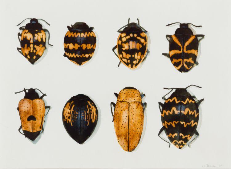 Walter Oltmann; Beetles