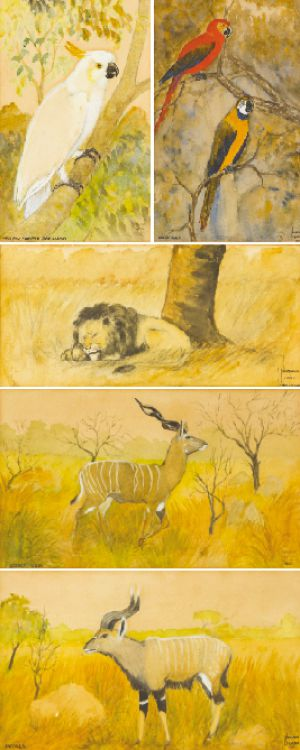 Norman Lighton; Sleeping Lion; Nyala; Lesser Kudu; Mawcaws (sic); Yellow-crested Cockatoo