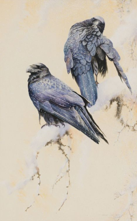 David Ord Kerr; Pair of Ravens in Falling Snow