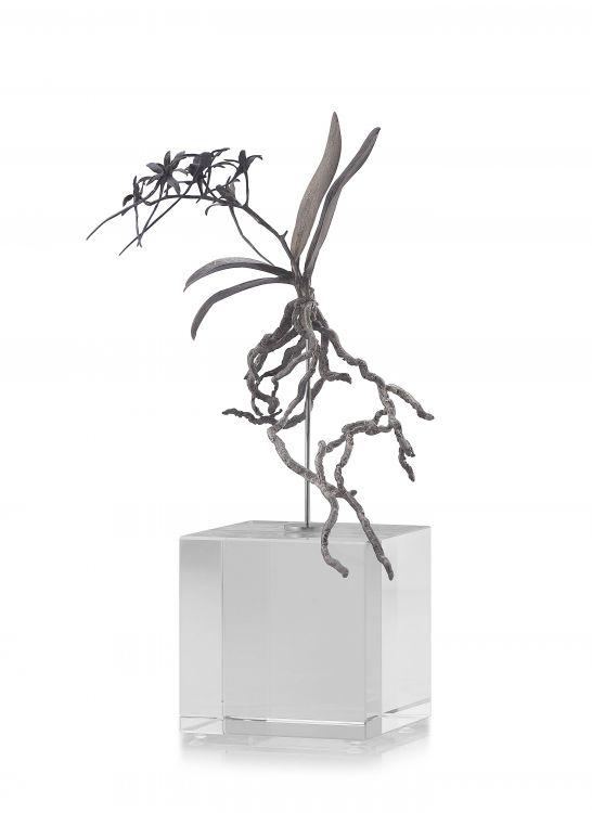 Nic Bladen; Mystacidium Capense