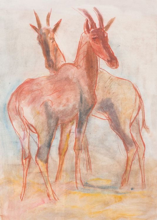 Fritz Krampe; Hartebeest Antelopes