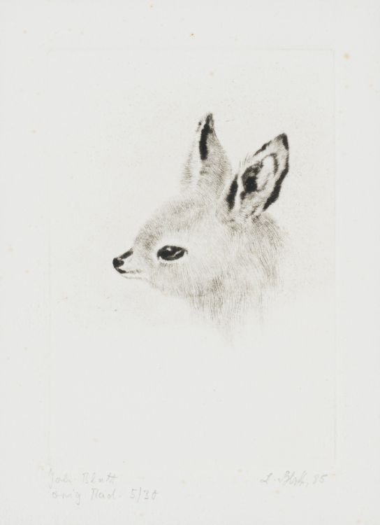 Johannes Blatt; Young Bat-eared Fox
