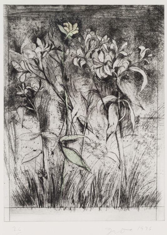 Jim Dine; Temple of Flora – Superb Lilies