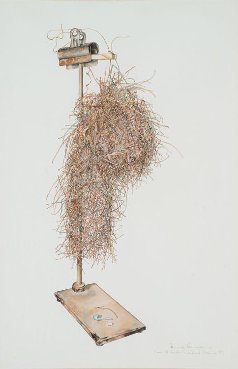 Anne Ginsburg; Nest of Red-headed Weaver