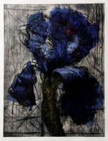 William Kentridge; Iris
