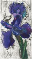 William Kentridge; Dutch Iris