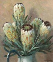 Willem Hermanus Coetzer; Green Proteas