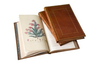 Andrews, H.C.; Coloured Engravings of Heaths: The Drawings Taken from Living Plants Only