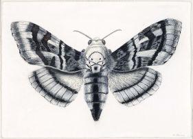 Walter Oltmann; Moth