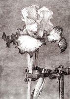 William Kentridge; Iris II in a Clamp