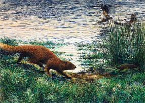Dylan Lewis; Water Mongoose Chasing Vlei Rat