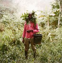 Pieter Hugo; Paul Ankomah, Wild Honey Collector, Techiman District, Ghana, 2005