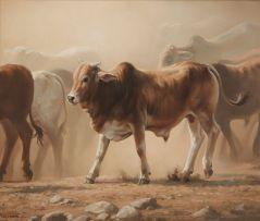 Jaco van Schalkwyk; Young Brahman Bull