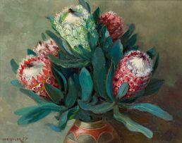 Willem Hermanus Coetzer; Proteas