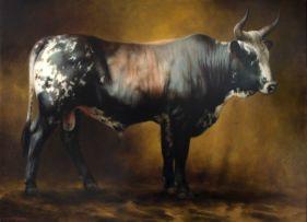 Jaco van Schalkwyk; Nguni Bull