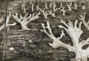 Kim Berman; Alien Landscape, White River II