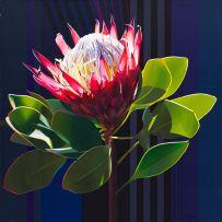 Paul Blomkamp; Protea II...The Electric Essence