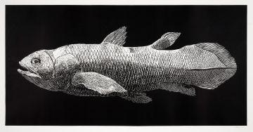 Walter Oltmann; Coelacanth