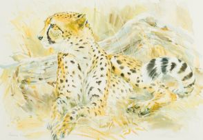 Patricia Mary Vaughan; Cheetah
