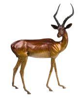 Danie de Jager; Impala Ram