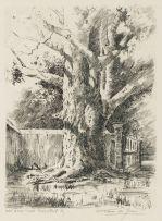 Tinus de Jongh; Old Gum Tree, Bergvliet