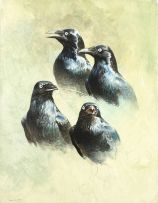 Raymond Harris-Ching; Starling Studies