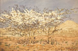 Adolph Jentsch; Arid Landscape with Acacia trees in Bloom