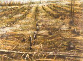 Kim Berman; Stripped Lowveld Plantation II