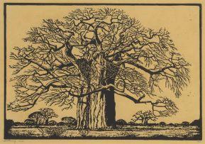 Jacob Hendrik Pierneef; Kremetartboom (Nilant 73)
