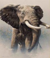 Fabrizio (Fuz) Caforio; Elephant