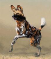 Fabrizio (Fuz) Caforio; Wild Dog