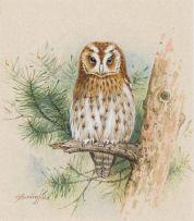 Gordon Beningfield; Tawny Owl (Strix aluco)