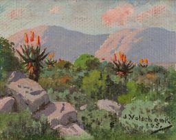 Jan Ernst Abraham Volschenk; Mountain Aloes