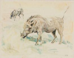 Zakkie Eloff; Warthogs
