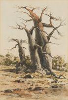 Otto Klar; Baobab Trees