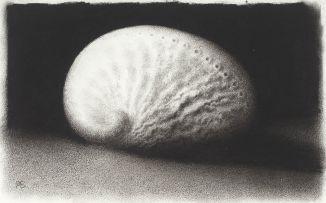 Paul Emsley; Abalone Shell