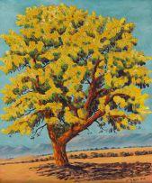 John Koenakeefe Mohl; Acacia Karroo in Flower