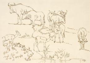 Zakkie Eloff; Wildebeest